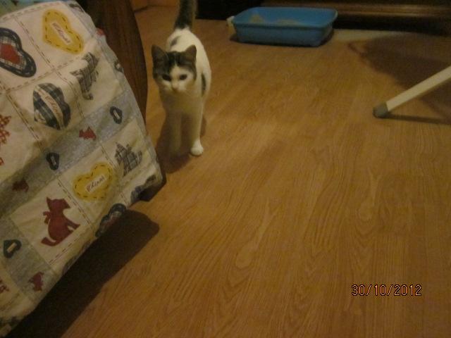 Chipie est arrivée hier à la maison Img_4012