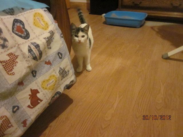 Chipie est arrivée hier à la maison Img_4013