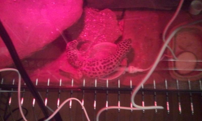 Cleo laid an egg 2012-015