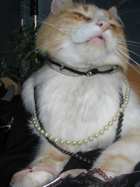 Dernieres créations bijoux de So... Chat_m14