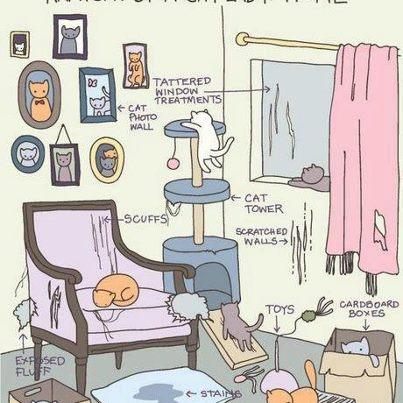 Chez vous  Cats_p10