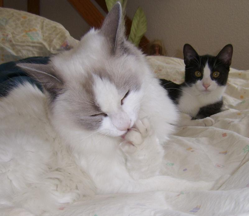 Le chat des voisins Copie_10