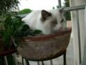 Quelle est la pire bêtise faite par vos chats ? Fanou_11