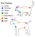 chakras des animaux  Catdog10