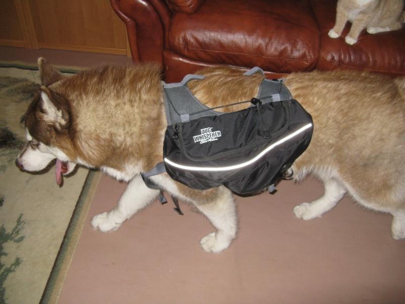 Рюкзак для собаки. 00115