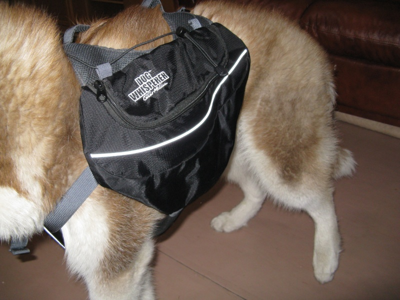 Рюкзак для собаки. 00615