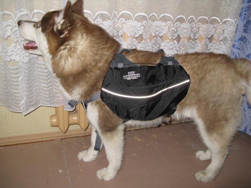 Рюкзак для собаки. 00712