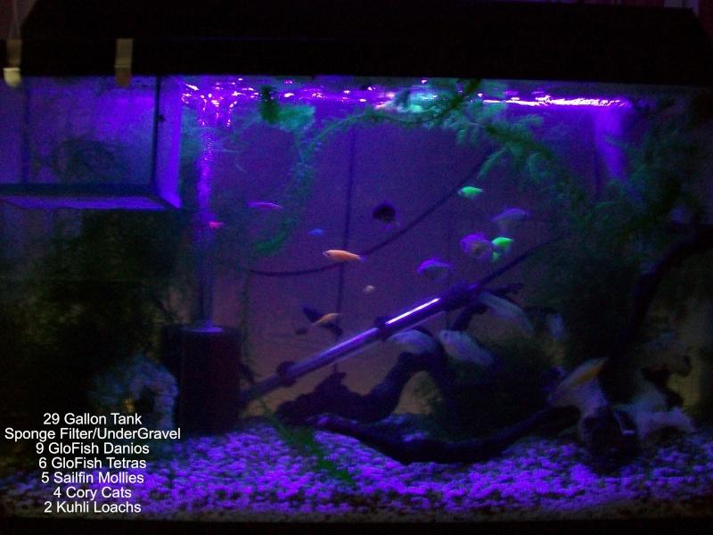 29 Gallon Freshwater  Tank_p10