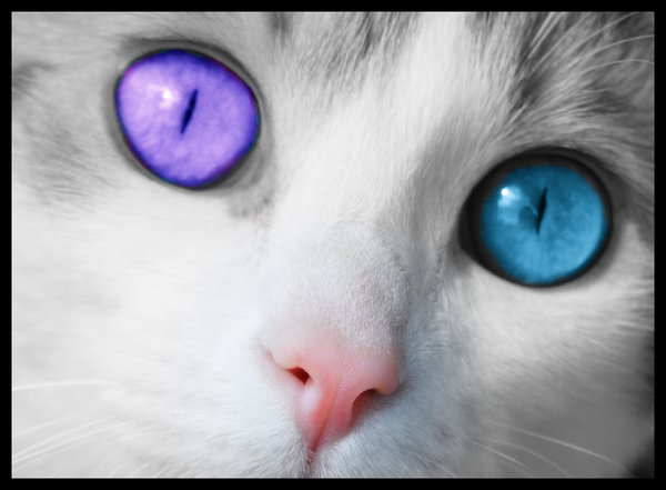 Avatar Regards... Cats_e10