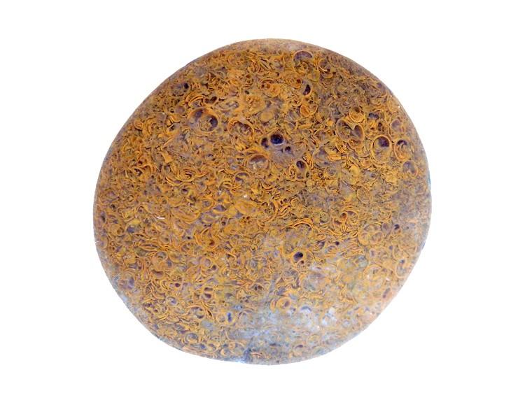 Yuhua Stone (Rain Flower Stone) - Page 3 Fossil40