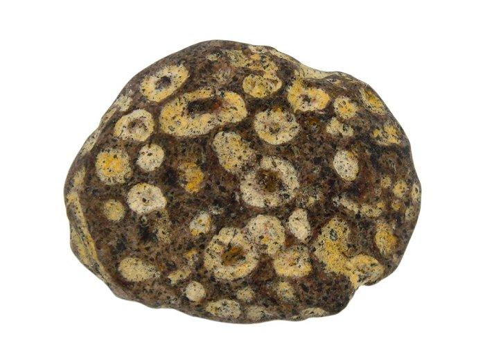 Yuhua Stone (Rain Flower Stone) - Page 3 Fossil43