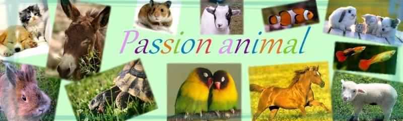 Passion-Animal