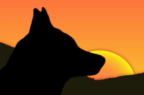 Czechoslovakian Wolfdog {Vlcak} Breed Club of Great Britain