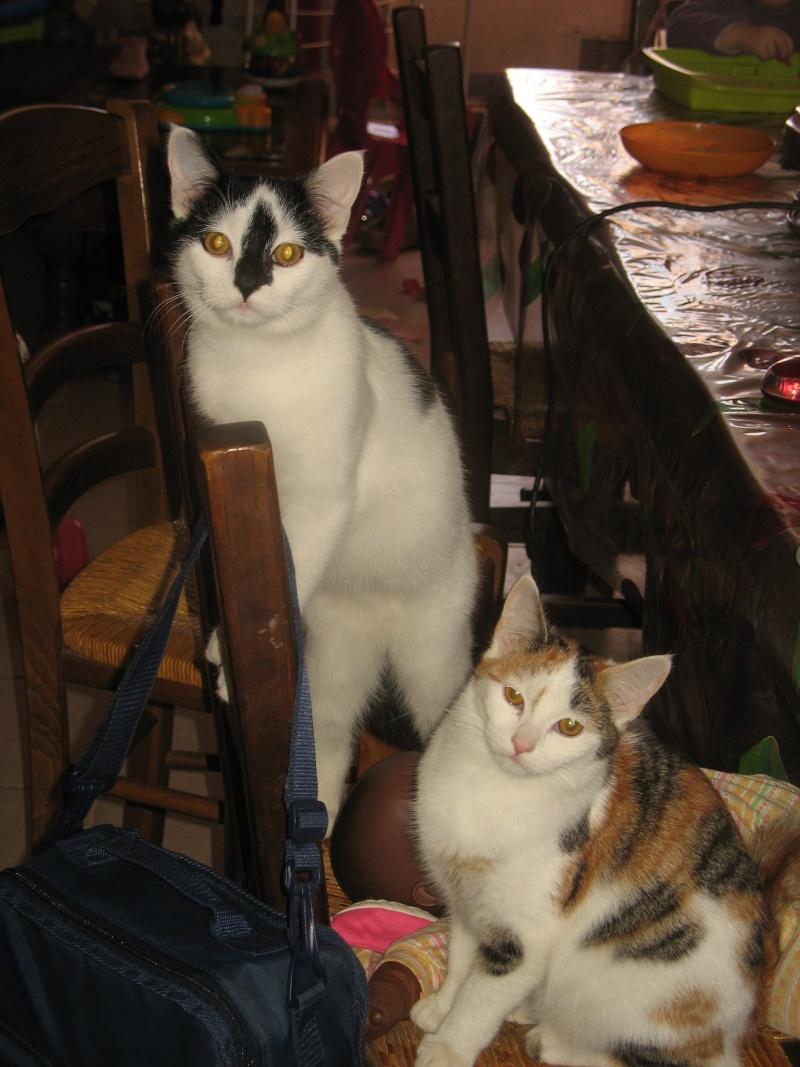Spécials Photos : Avant/Après de nos chats - Page 6 Img_5319