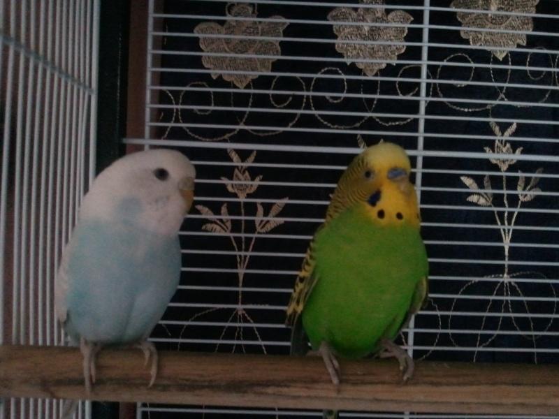 Mes petits protéger Photo064