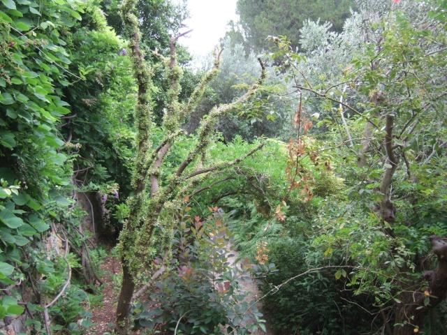 (83) Parc Saint-Bernard et Villa Noailles - Hyères Dscf0020