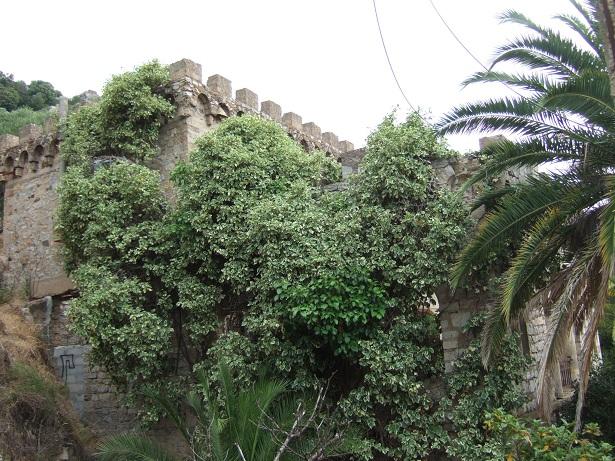 (83) Château Saint-Pierre - Hyères Dscf0043