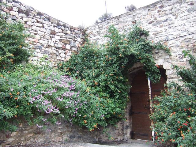 (83) Parc du Castel Sainte-Claire - Hyères Dscf1734