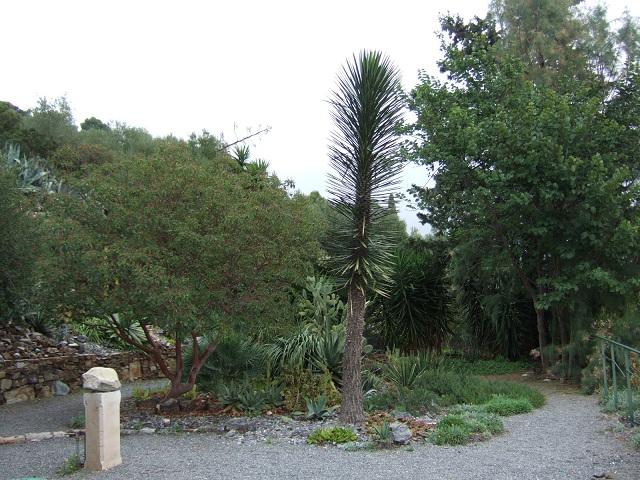 (83) Parc du Castel Sainte-Claire - Hyères Dscf1736