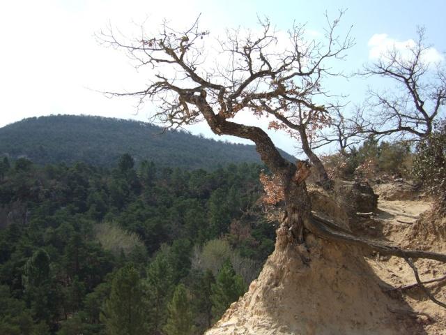 Balade dans le Colorado provençal - Rustrel (84) Dscf8210