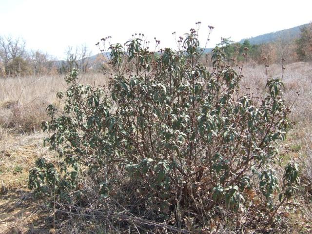 Balade dans le Colorado provençal - Rustrel (84) Dscf8211