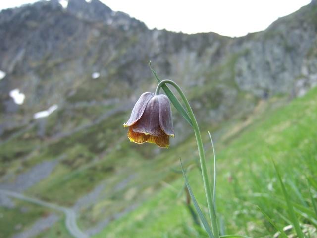 (65) balades dans les Hautes-Pyrénées Dscf9035