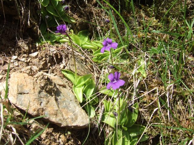 (65) balades dans les Hautes-Pyrénées Dscf9213