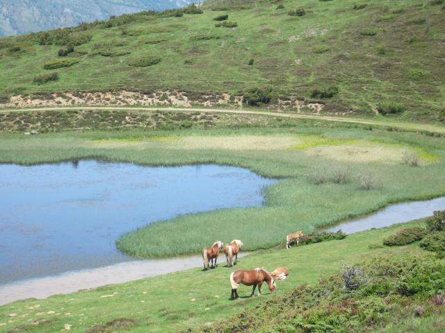 (65) balades dans les Hautes-Pyrénées Dscf9214