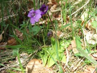 (65) balades dans les Hautes-Pyrénées Dscf9312