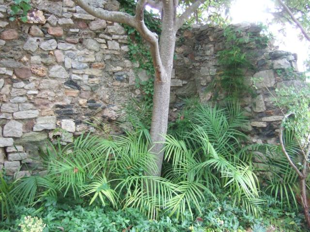 (83) Parc Saint-Bernard et Villa Noailles - Hyères Dscf9921