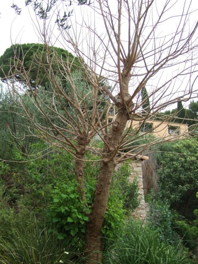 (83) Parc Saint-Bernard et Villa Noailles - Hyères Dscf9927