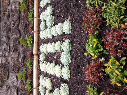 Le civisme par les plantes Photo012