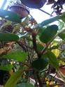 Plantes vendu pour un orange rubra Img_1725