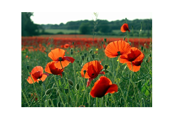 RESTAURATION D'UNE CORNEMUSE AYANT PARTICIPE A LA GRANDE GUERRE 1914/1918 1311