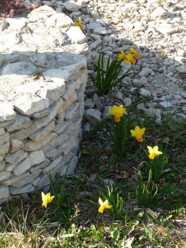 NARCISSES 2012 P1160220