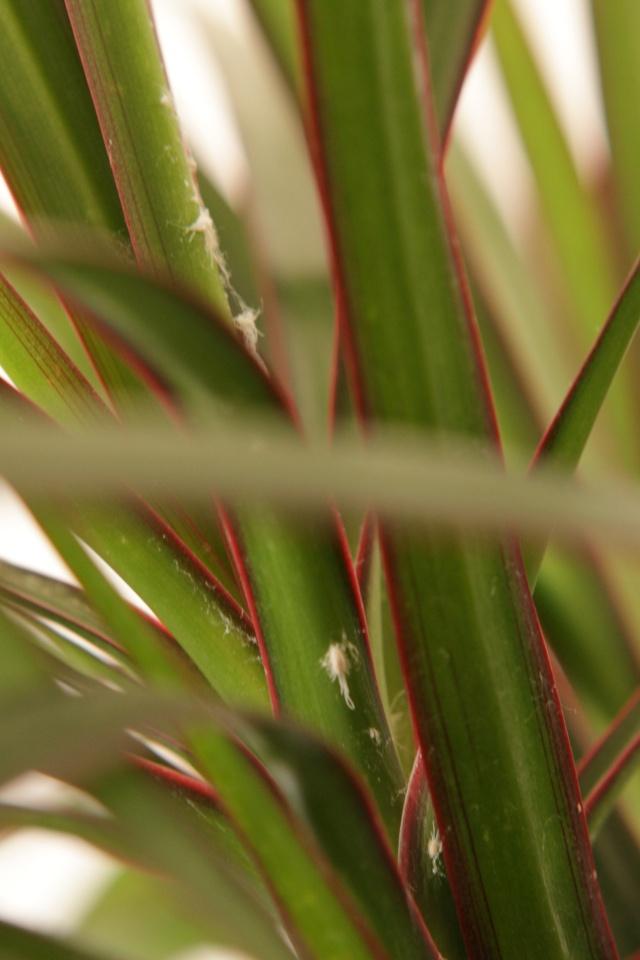 help: plante infestée...de cochenilles ? Img_2310