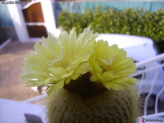 mes cactus et succulentes Gbpix_18