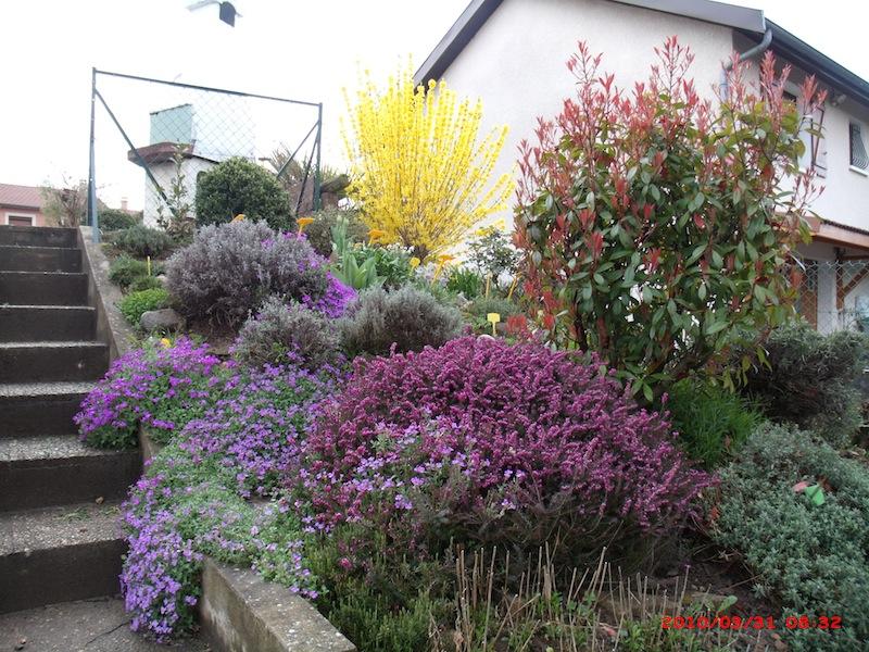 Mon jardin extérieur Gedc1511