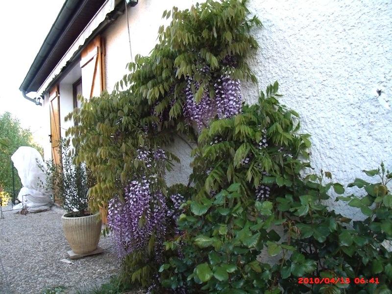 Mon jardin extérieur Gedc1710
