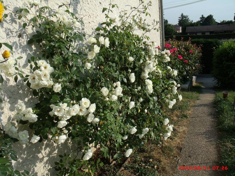 Mon jardin extérieur Gedc2410