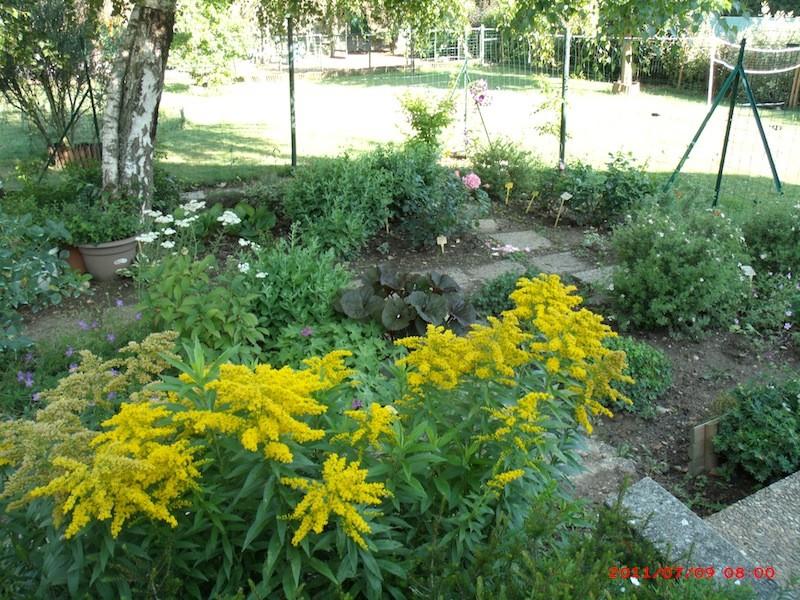 Mon jardin extérieur Gedc3410