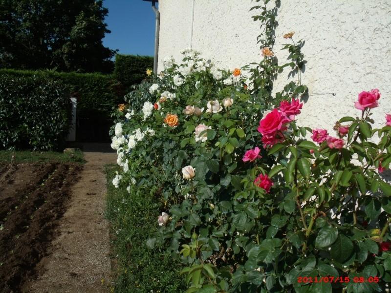 Mon jardin extérieur Gedc3510