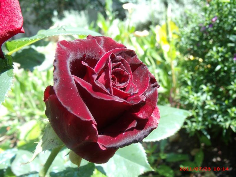 Mon jardin extérieur Gedc3710