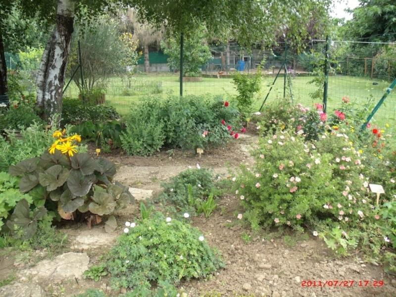 Mon jardin extérieur Gedc3810