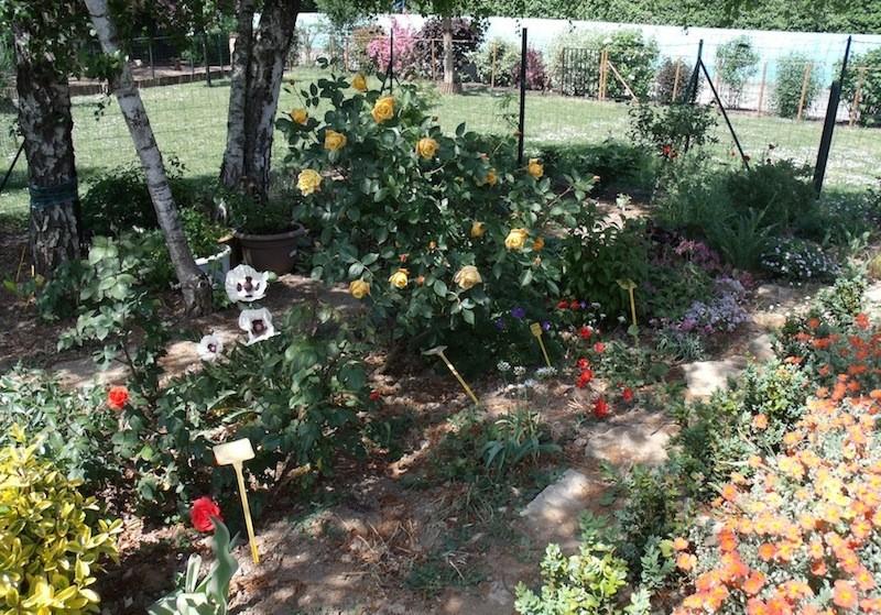 Mon jardin extérieur Mai_2010
