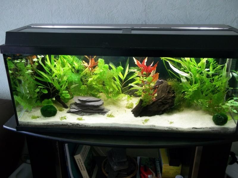 Mes aquarium : un 240 L et un 20L - Page 2 100_0215