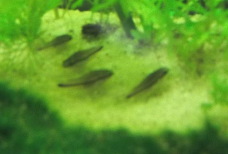 Mes aquarium : un 240 L et un 20L - Page 2 100_0314