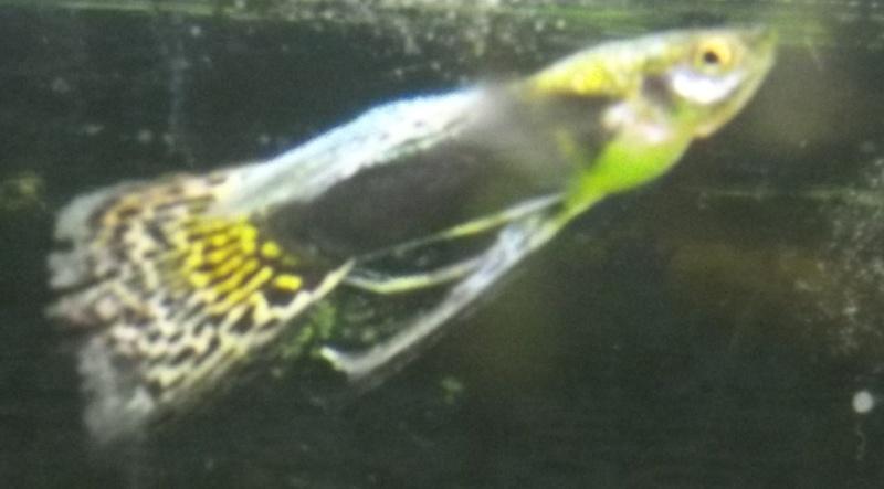 Mes aquarium : un 240 L et un 20L - Page 2 100_0316