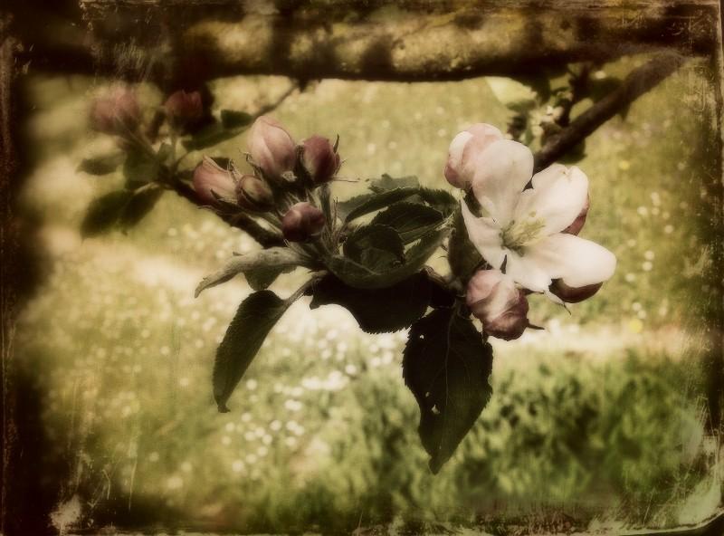 Travail sur une photo de fleur 10021310