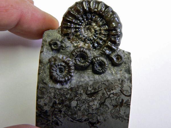 Yorkshire Coast finds. Ammo_b16